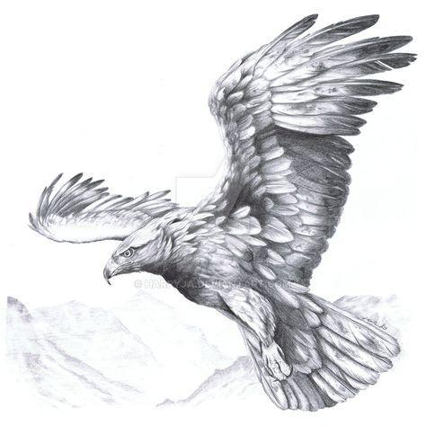 Golden Eagle Aquila chrysaetos II by harpyja.deviantart.com on @DeviantArt