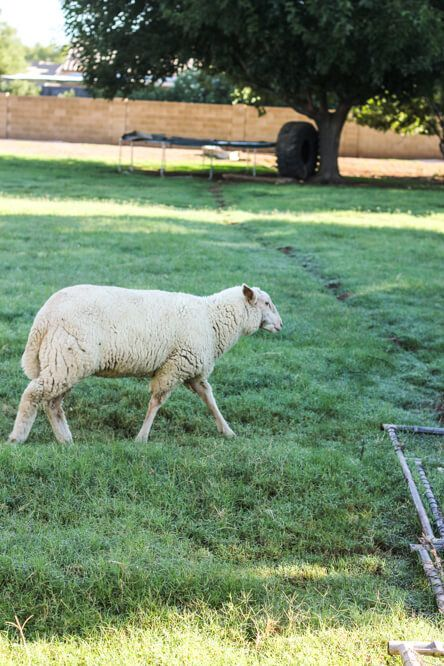 Sustainable farming: Caring For Animals The Way Nature Intended