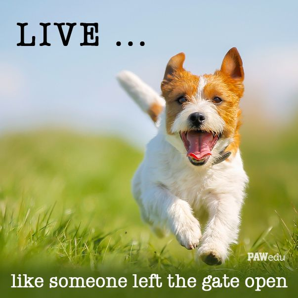 Live Like Someone Left The Gate Open Quote: 1000+ Images About Inspiring Animal Quotes On Pinterest
