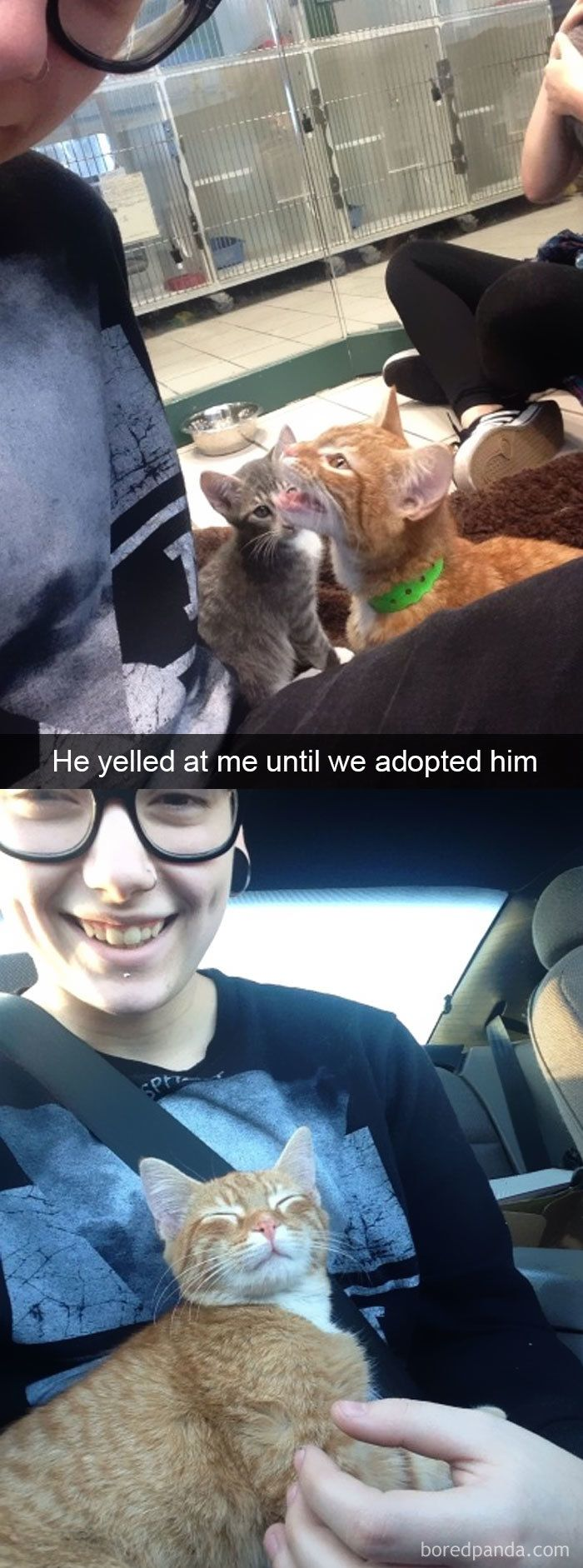 126 Hilarious Cat Snapchats That Will Leave You With The Biggest Smile (New Pics)