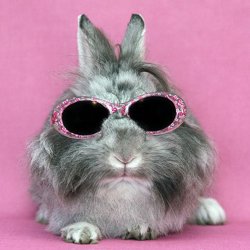 bunny with glasses animals wearing glasses pinterest