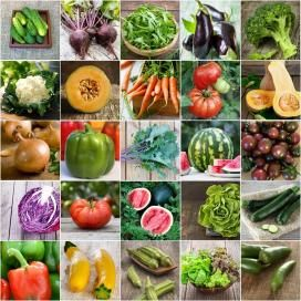 Best 25 Organic vegetable seeds ideas on Pinterest Organic