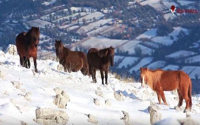 Nikolnews: Τα άγρια άλογα στις χιονισμένες βουνοκορφές της Πρ...