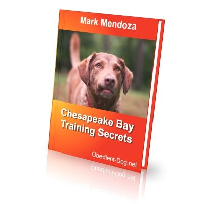 Chesapeake Bay Retriever Training Secrets - How To Train a Chesapeake Bay Retriever