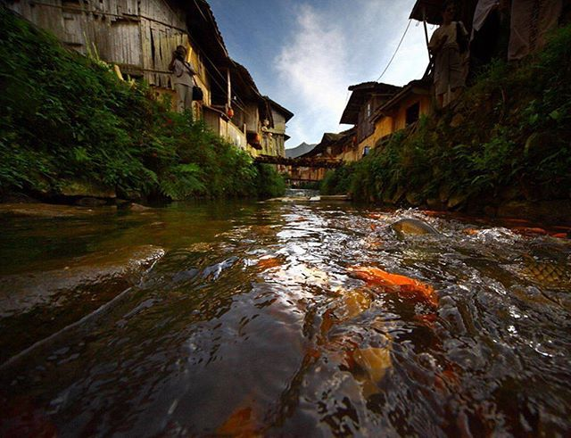Located in Puyuan Village in Zhouning County, Fujian Province, carp stream gets its name from the tens of thousands of carps in it.The carp stream sources from Song Dynasty, it experiences more than 800 years historical vicissitudes. Although experienced many chaos cased by war, the famine, the carps have multiplied well under villagers' protection until now. It is really a miracle. #Travel #China #naturephotography #naturesbeauty #village #carp #zhouning #Ningde