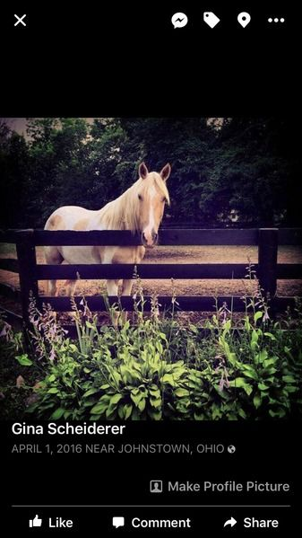 Horse for Lease | HorseClicks