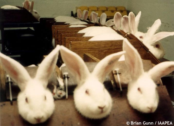 "The ""Necessity"" of Cosmetic Animal Testing - Advocacy for Animals"