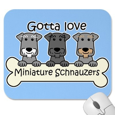 Mini Schnauzers , I saw this product on TV and have already lost 24 pounds! http://weightpage222.com