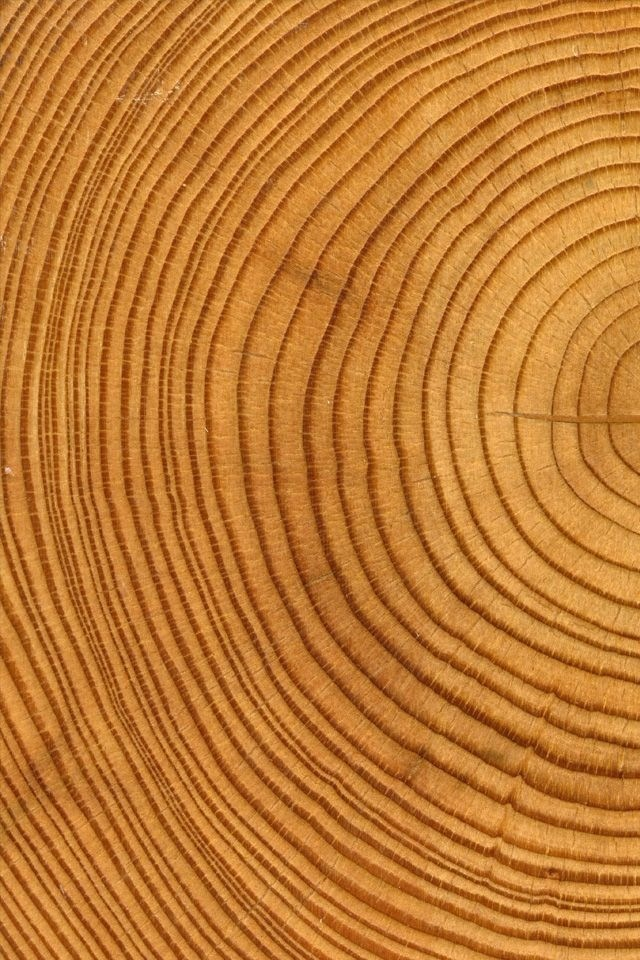 Tree Trunk Rings | Curved lines | Circular patterns