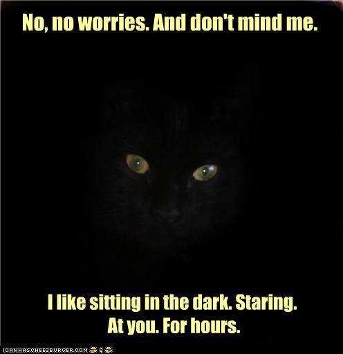 so true: No Worry, Kitty Cat, Funny Cat, Lil Kitty, Crazy Cat, Cat Sit, Black Cat Humor, Kitteh Kute, Cat Lady