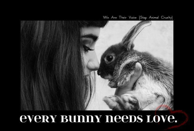 Adopt a house rabbit!