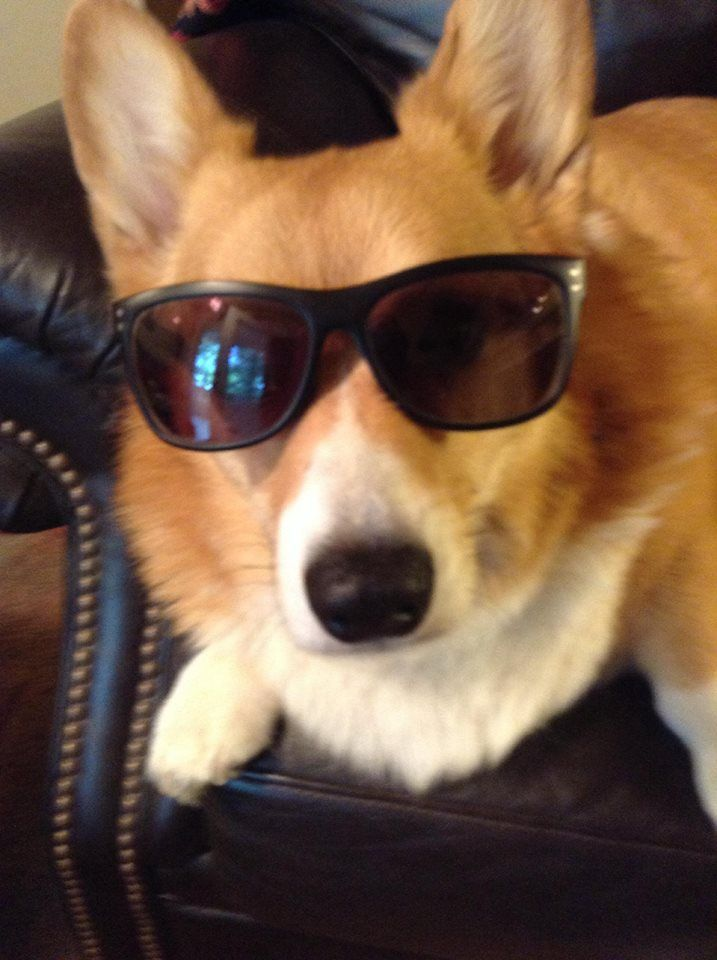 Cool dogs with sunglasses - photo#19