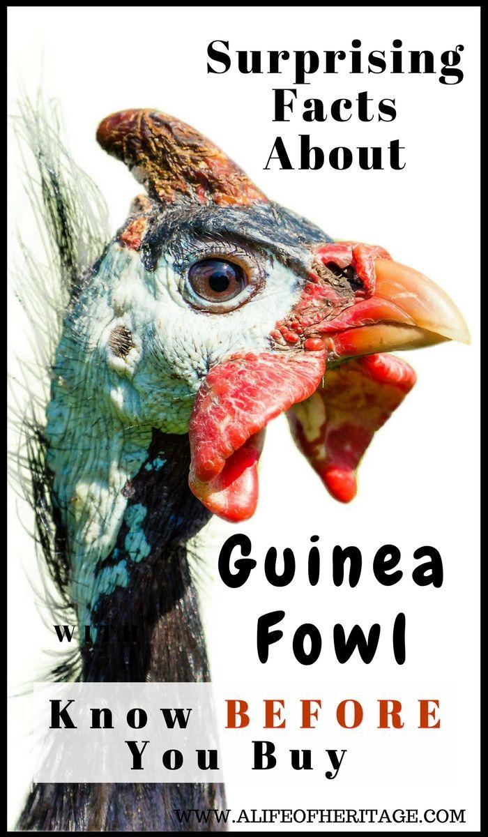 Best 25 Hens Ideas On Pinterest  Beautiful Chickens -6906