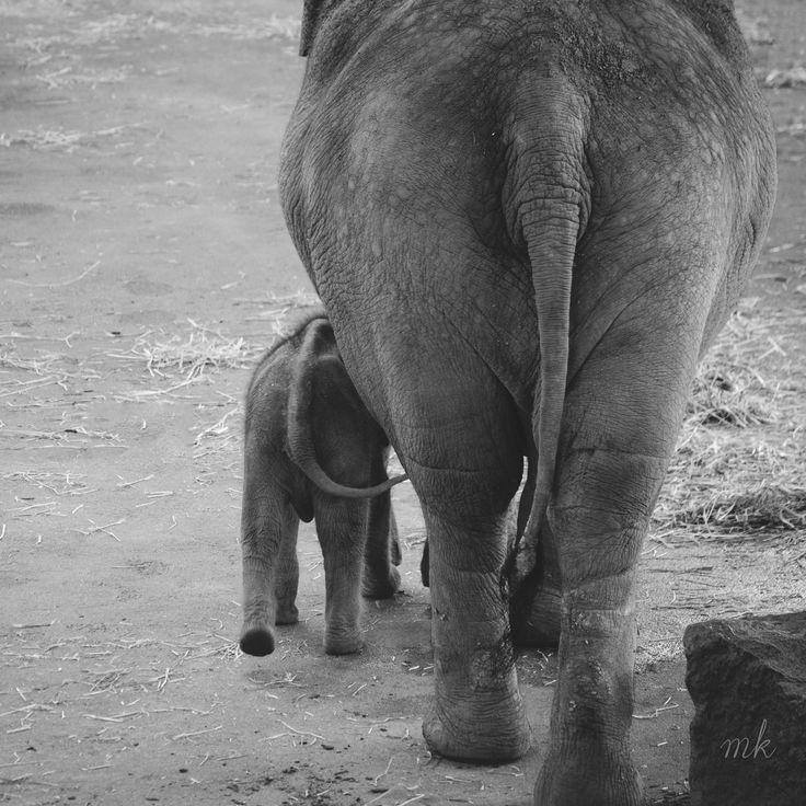 #kölnerzoo #babyelephant #blackandwhite #photographie