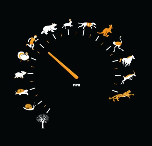 GREAT! AS FAST AS I CAN T-SHIRT BY THOMAS DE SANTIS