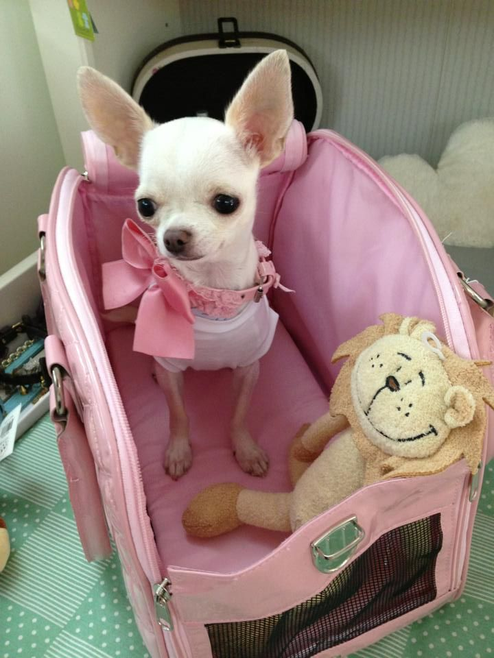 Pretty in pink Chi