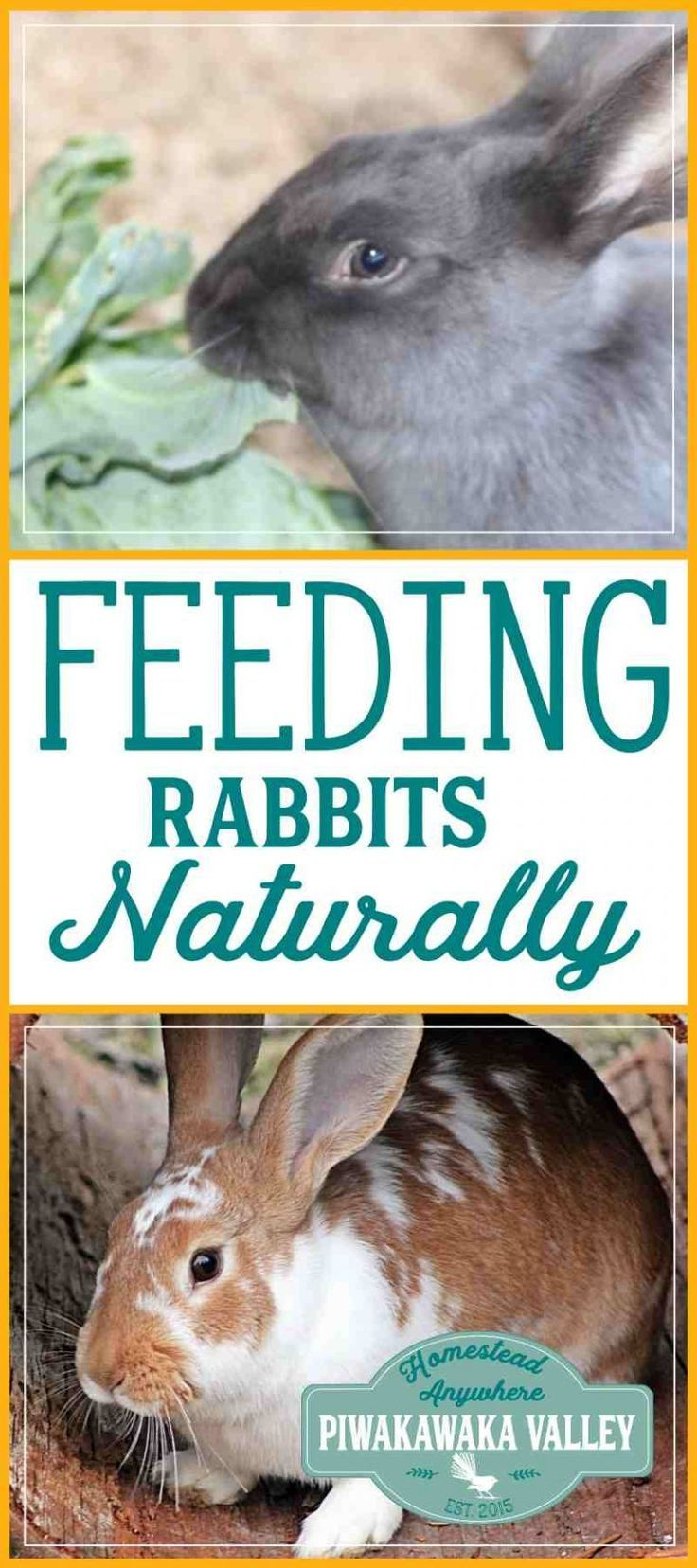 Safe foods for rabbits a comprehensive list for feeding your rabbits with out using pellets. #rabbits #meatrabbits #homestead