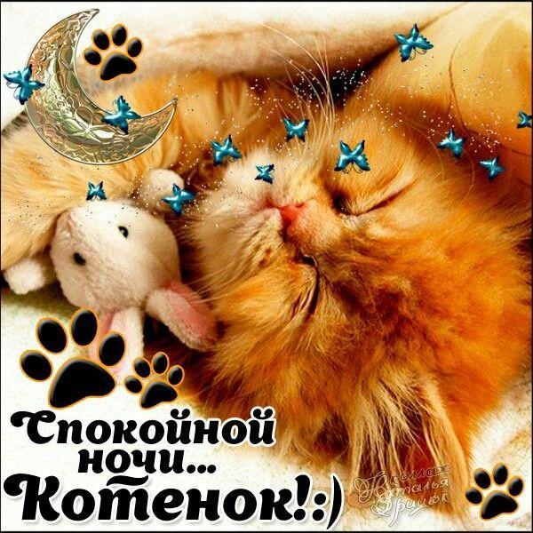 Рисунки аватарки, картинки спокойной ночи котенок для девушек