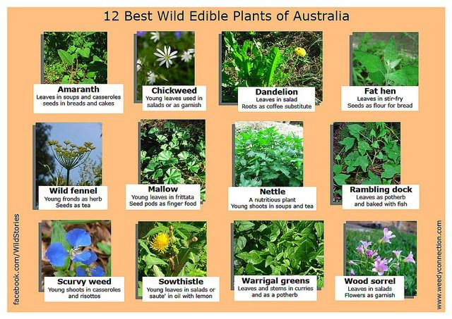 The Weedy Connection have posted a great image listing the most common edible weeds in Australia. (See the full size image.)