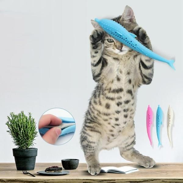 Prevent Cat Gum Disease And Bad Breath Nothing Is Worse Than A Kitty With Bad Breath And Teeth Protect Tooth Decay And Gum Disease Cat Toys Pets Fish Cat Toy