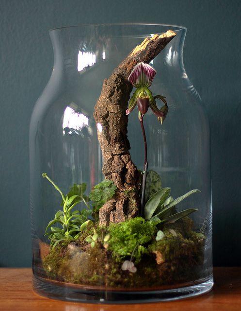 Slipper Orchid Terrarium by Ken Marten, via Flickr