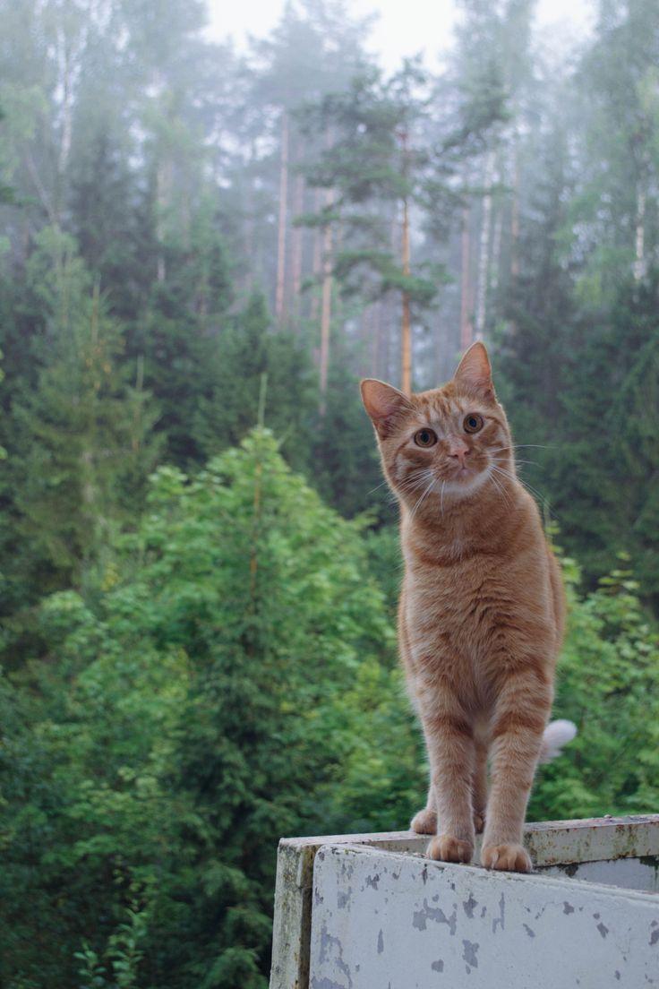cat :hearts: