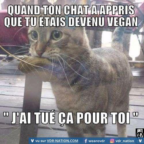 Quand ton chat a appris que tu étais devenu vegan ! j'ai tué ça pour toi ^^ !…