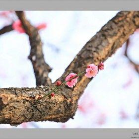 봄의 여신