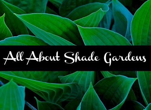 Shade Garden Roundup