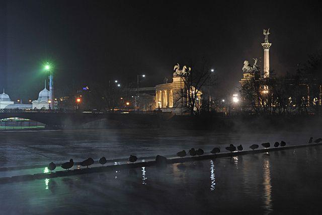 Tőkés réce, 1146 Budapest, Városligeti-tó. A vízimadarak kedvelik a Városligeti tavat, amely a közeli fürdőből kapja a termálvizet