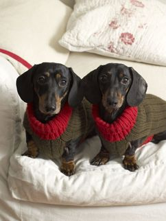 Twins - the cutie on the right has the face of my baby dachshund