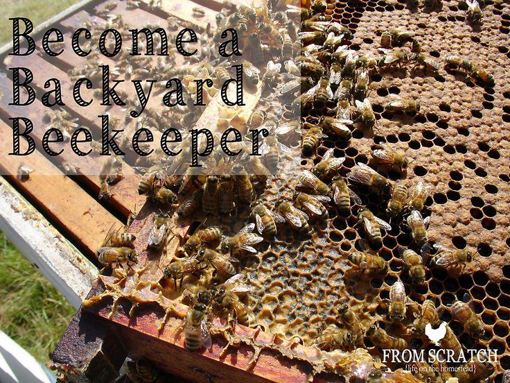 Beekeeping U2013 Become A Backyard Beekeeper!