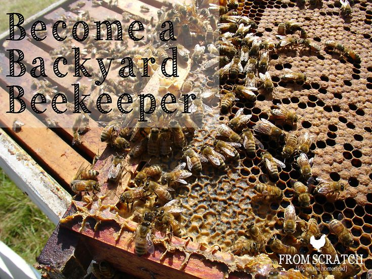 Beekeeping – Become a Backyard Beekeeper!