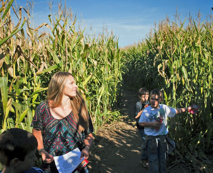 Located on Sauvie Island, a rural escape north of Portland, the Corn Maize offers visitors five acres of physical and mental challenges. Sept - Nov 1