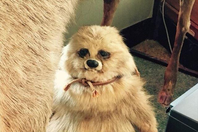 これはタヌキなのかな 鹿の足元に飾られている謎の剥製にtwitterで大盛り上がり Fundo 剥製 タヌキ 鹿