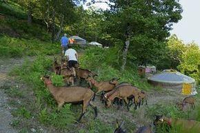 Avec un âne : La Chèvrerie des Felges - Cévennes Ecotourisme