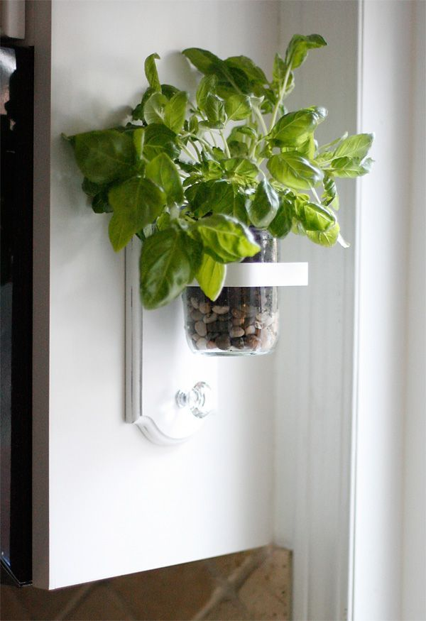 how to avoid small insects on indoor plant soil