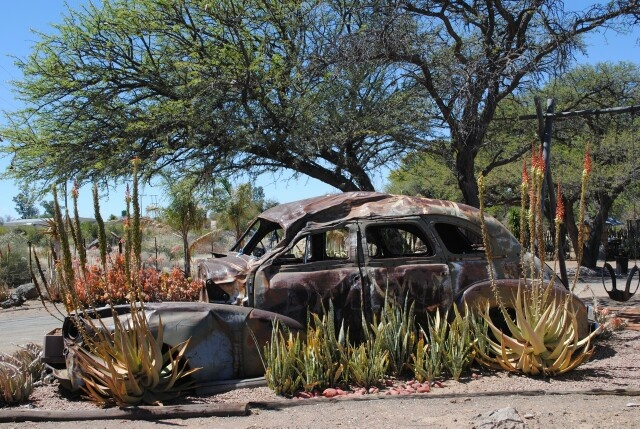 Nature is gardening here. Aloes and wild trees add design to this antique car. Rust is coloring this picture of Akkerboom Padstal, near Keimoes in the Northern Cape.