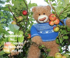 Tor the Bear, Norway, summer, apple, apple tree, inspirational quote, teddybear, toys