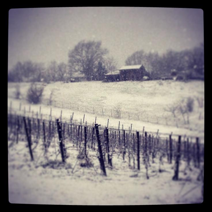 Snow on our Podere #Laurento ! #umbertocesari #wine #vineyards