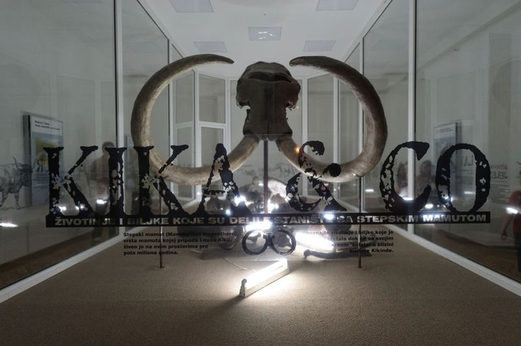 The Kikinda mammoth,  Photo Sretenovic