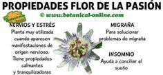 flor de la pasion propiedades, planta medicinal