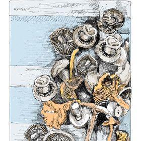 illustration - May van Millingen