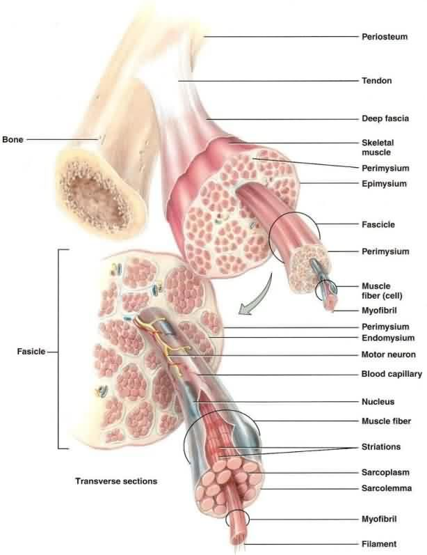 32 best Acupressure Trigger Points images on Pinterest | Acupressure ...