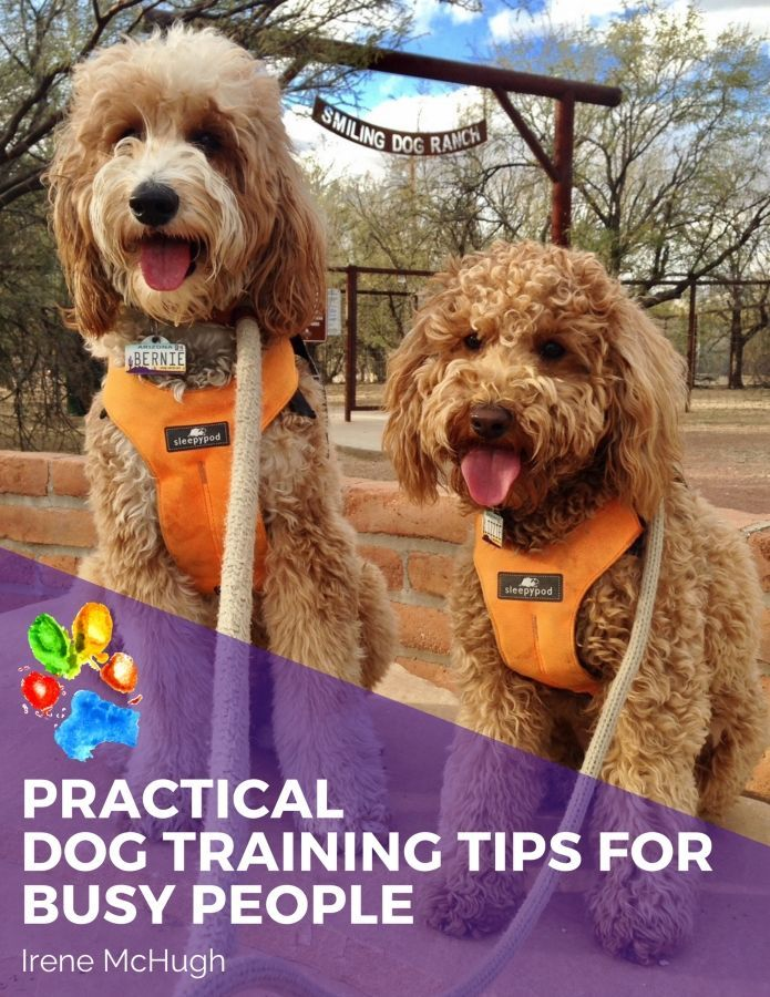 Subscribe To Our Community Of Therapy Dog Enthusiasts To Get Your