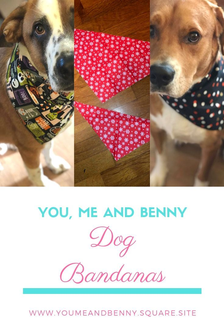 Fashionable Cute And Affordable You Me And Benny Create Dog