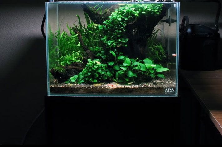 289 best images about freshwater nano on pinterest for Low maintenance fish tank