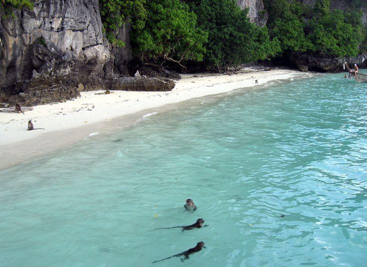 Monkey Beach Thailand... You can feed the monkeys