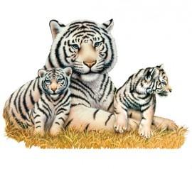 Levensechte muursticker, tijger met 2 welpjes  Afmeting 60 x 87 cm (hxb)  Geïllustreerd door Howard Robinson