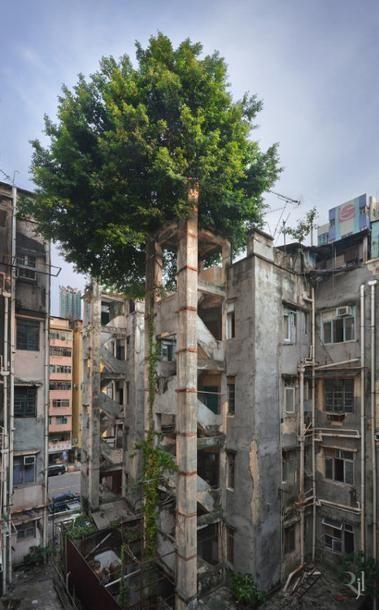 Mooie foto's van Romain Jacquet-Lagreze in de serie Wild Concrete over een fenomeen uit Hong Kong, de wildgroeiende bomen op het Aziatische beton.